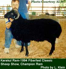 Karakul Sheep - photo by L. Klein